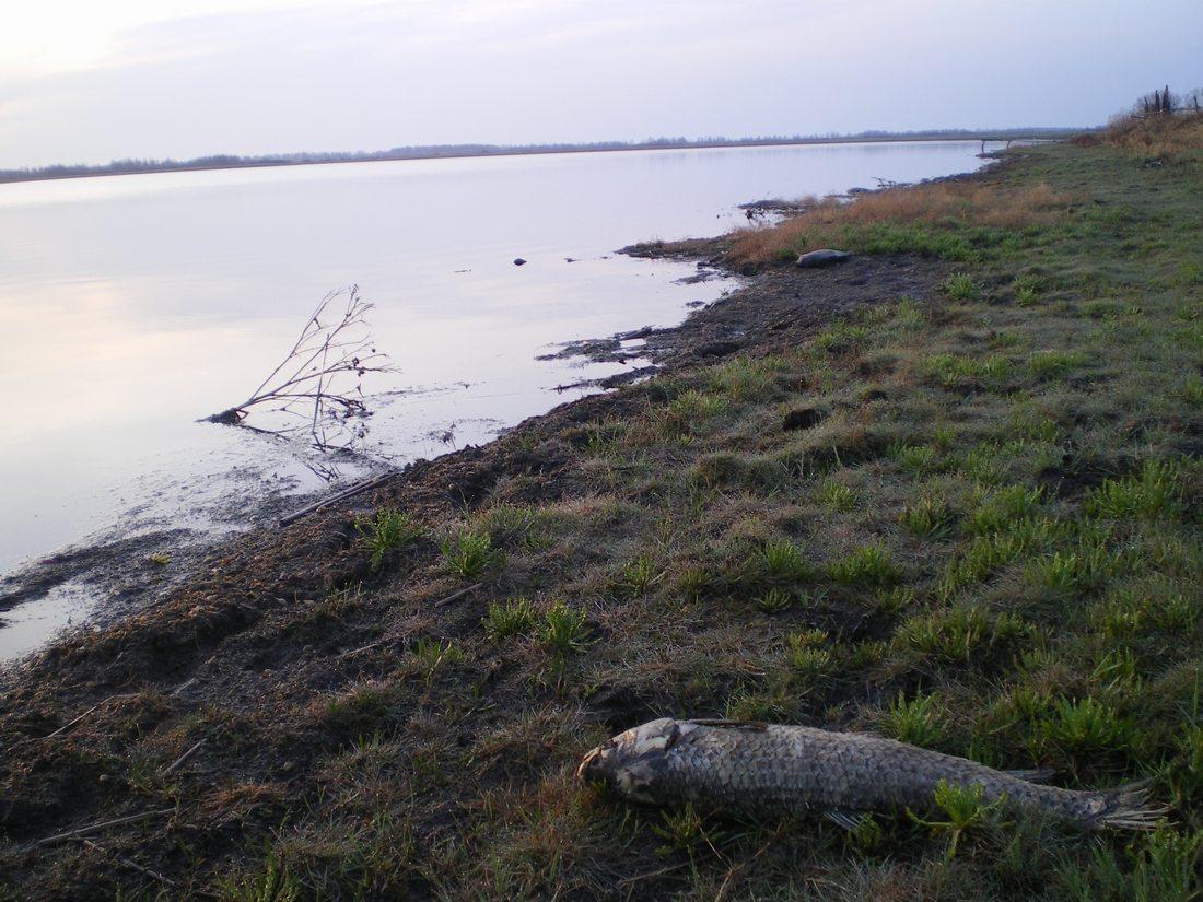 Свежие отчеты о рыбалке в Челябинской области — где можно поймать карася и карпа