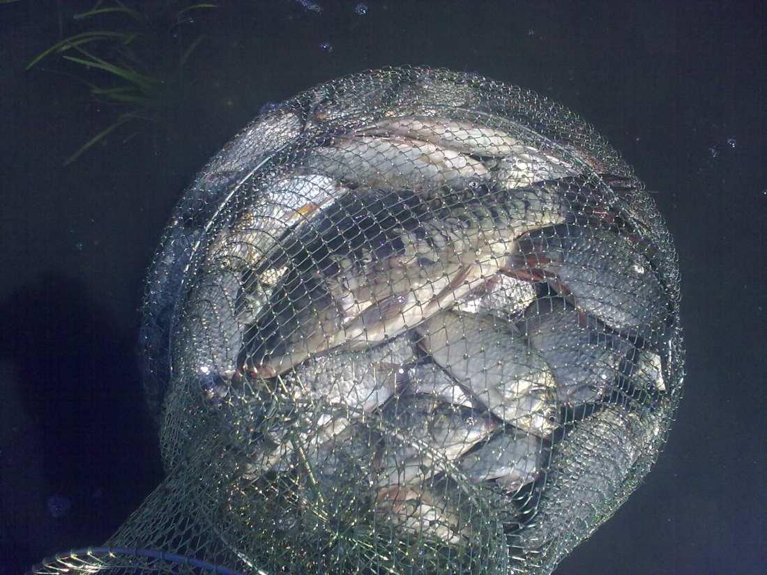 Прогноз для рыбака в челябинске